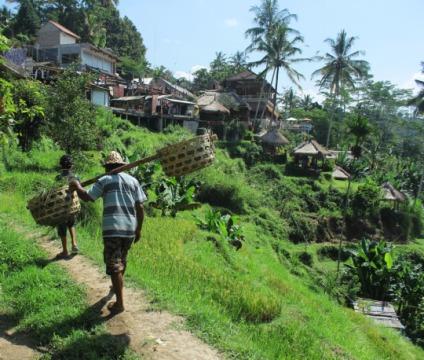 Petani Tegalalang Bali