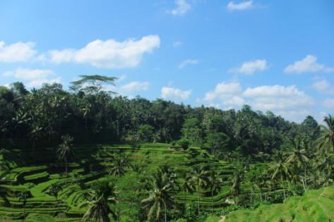 Pemandangan sawah berundak Tegalalang Bali